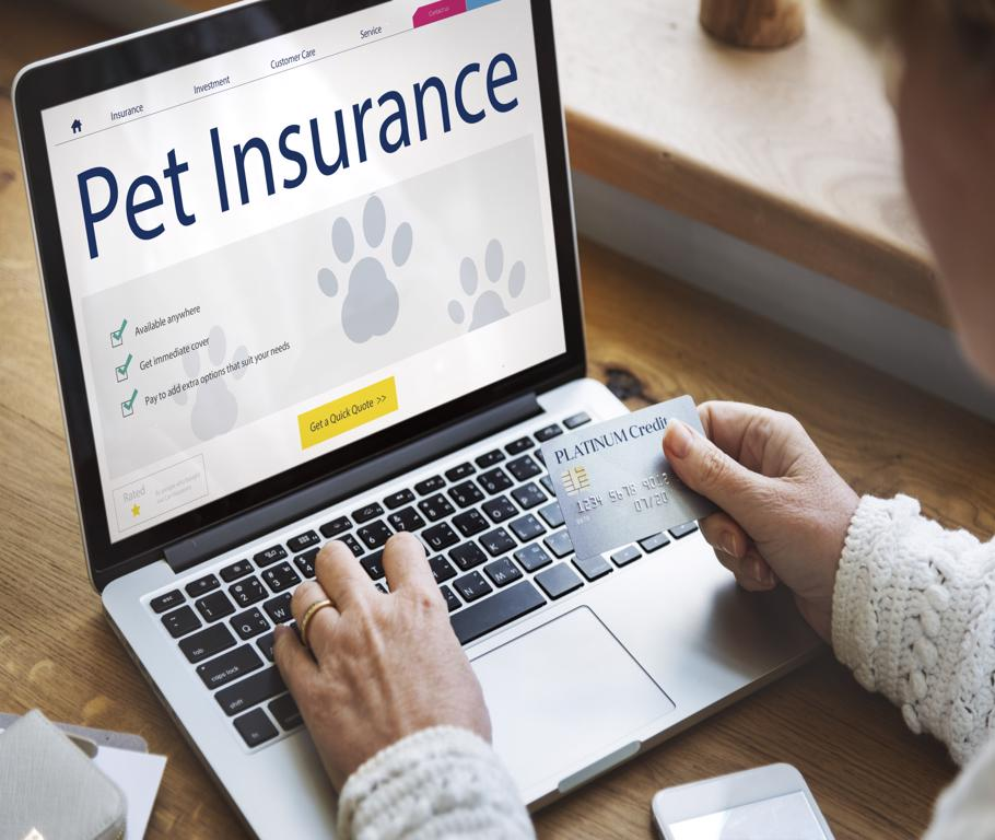 Is Pet Insurance Worth Buying? 2021 Pros and Cons of Pet Insurance